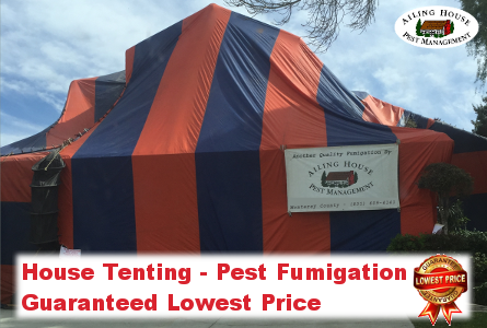 Pest Fumigation-Termites Beetles Guaranteed Lowest Price House Tenting-Ailing House Pest Management Inc