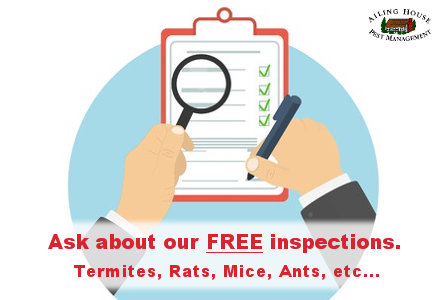 Pre Home Buying Inspection-Free Pest Inspection-Termites-Ailing House Pest Management Inc