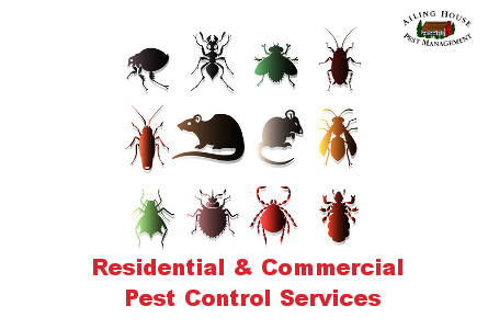 Residential-Commercial Pest Control Services-Ailing House Pest Management