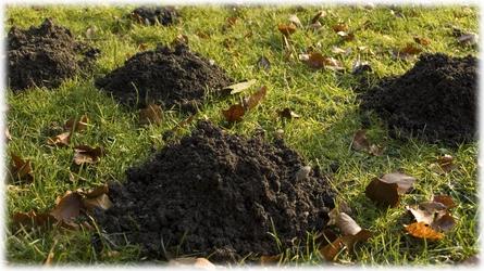 Mole Control Carmel CA – Ailing House Pest Management