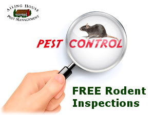 Rat Mice Rodent Control – Rat- Mice Exterminator Milpitas CA - AIling House Pest Management Inc