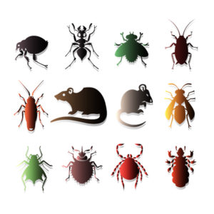 Pest Control Services Monterey County | Ailing House Pest