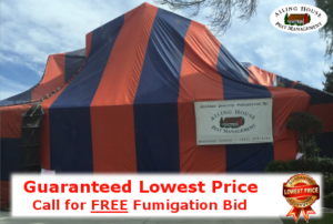Guaranteed Lowest Price Termite Fumigation Treatment – Alameda County CA - Ailing House Pest Management