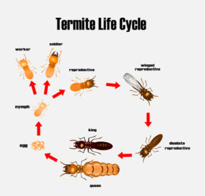 Termite Pest Fumigation – Guaranteed lowest price Santa Cruz County-San Benito County-Alameda County-Monterey County-Santa Clara County - Ailing House Pest Management